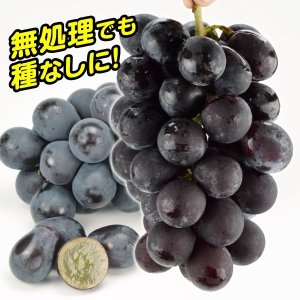 糖度20〜24度!タネなし極甘 商品情報 九州大学で育種されたブドウがついに登場。糖度は20〜24度...