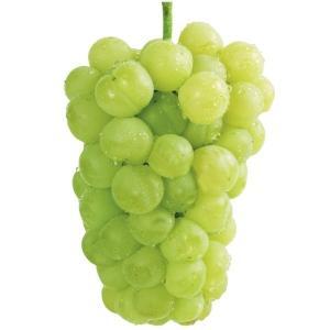 果樹苗 ブドウ 瀬戸ジャイアンツ 1株 / ぶど...の商品画像