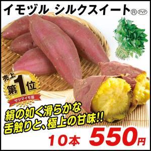 イモヅル(芋づる) シルクスイートPR(登録品種名HE306)イモヅル 10本 / さつまいも苗 サツマイモ苗 薩摩芋|kokkaen
