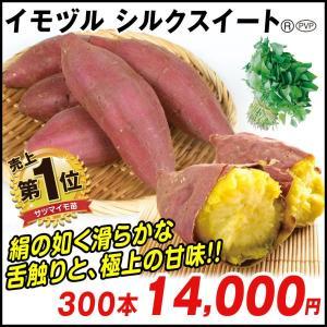 イモヅル(芋づる) シルクスイートPR(登録品種名HE306)イモヅル 300本 / さつまいも苗 サツマイモ苗 薩摩芋|kokkaen