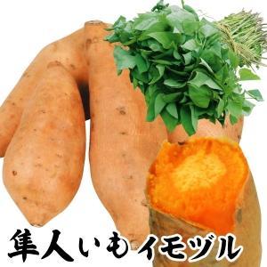 イモヅル(芋づる) 隼人イモイモヅル 20本 / さつまいも苗 サツマイモ苗 薩摩芋|kokkaen