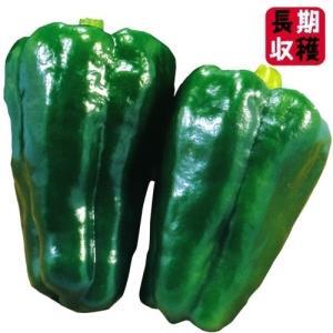野菜たね ピーマン・シシトウ 極早生秀緑ピーマン 1袋(1ml)|kokkaen