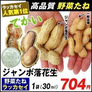 野菜たね 落花生 ジャンボ落花生 1袋(30ml) / 種 タネ|kokkaen