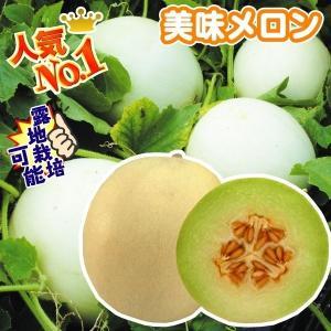 野菜たね メロン F1おてがるロジたん 1袋(8粒) / 種...