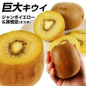 果樹苗 キウイ ジャンボイエロー&孫悟空(黄肉用オス木) 2種2株 / 果物苗 フルーツ苗 kokkaen
