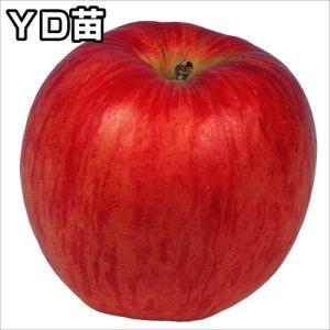 果樹苗 リンゴ YDつがる 1株 / 果物苗 フルーツ苗 林...