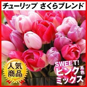 チューリップ 球根 さくらブレンド(無選別) 30球 / きゅうこん 花の球根 チュウリップ ちゅうりっぷ