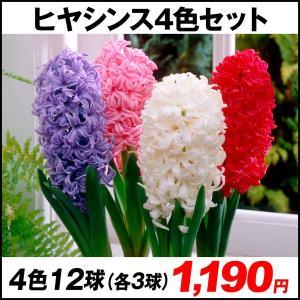 秋植え球根 ヒヤシンス4色セット 4色12球 (各3球)
