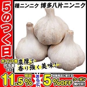 ニンニク 種球 博多八片ニンニク 種球 500g / にんにく 種ニンニク 大蒜 たね タネ 球根 ガーリック
