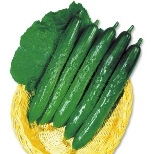 商品情報 照りのある濃緑果がよくとれ、高温期にも色つやが良い。うどんこ・べと病に強い。 お届け状態 ...