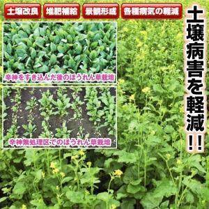 商品情報 土壌病害を軽減!! 辛味成分を多く含み、土壌菌低減効果が期待できます。葉がやわらかく、すき...