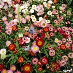 花たね ドライフラワーミックス 1袋(400mg)|kokkaen