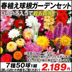 春植え球根ガーデンセット 7種50球 /|kokkaen