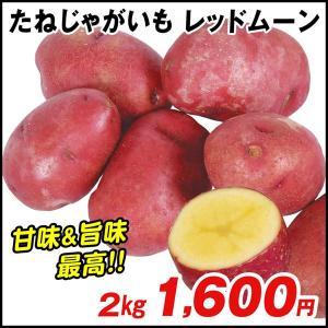 じゃがいも種芋 レッドムーン 2kg / ジャガイモ 馬鈴薯 たね芋 たねいも