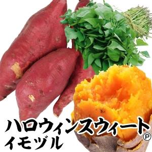 イモヅル(芋づる) ハロウィンスイートPイモヅル 25本 / さつまいも苗 サツマイモ苗 薩摩芋|kokkaen