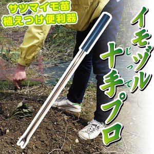 イモヅル(芋づる) 園芸資材 イモヅル十手プロ 1本 / さつまいも苗 サツマイモ苗 薩摩芋|kokkaen
