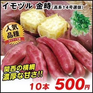 イモヅル(芋づる) 金時(高系14号選抜)イモヅル 10本 / さつまいも苗 サツマイモ苗 薩摩芋|kokkaen