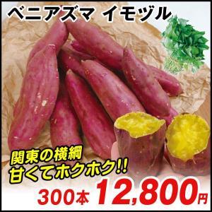 イモヅル(芋づる) ベニアズマイモヅル 300本 / さつまいも苗 サツマイモ苗 薩摩芋|kokkaen