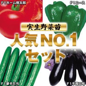 実生野菜苗 ナンバーワンセット 4種(各10株)