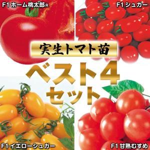 実生野菜苗 トマトベスト4セット 4種(各10株)