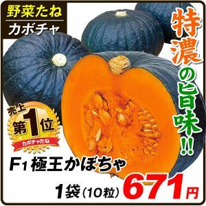 種 野菜たね カボチャ F1極王かぼちゃ 1袋(10粒) / 野菜のたね 種 国華園