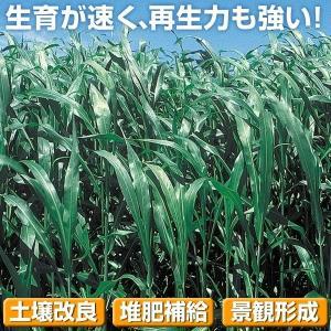 野菜たね 緑肥・景観作物 ソルゴー緑肥用 1袋(1kg)