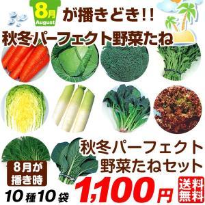 送料無料 野菜たね 8月蒔どき秋冬パーフェクト野菜セット 10種10袋|kokkaen