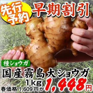 【早期予約】種ショウガ 国産霧島大ショウガ 1kg