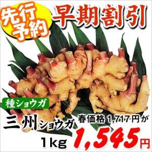 【早期予約】種ショウガ 三州ショウガ 1kg
