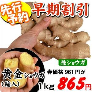 【早期予約】種ショウガ 黄金ショウガ(輸入) 1kg