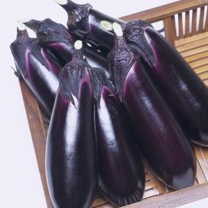 野菜たね タキイ交配 ナス とげなし千両二号PVP 1袋(40粒)|kokkaen