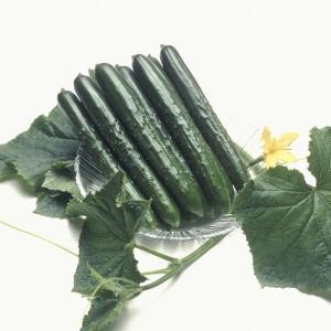 野菜たね タキイ交配 キュウリ 夏すずみR 1袋(17粒)|kokkaen