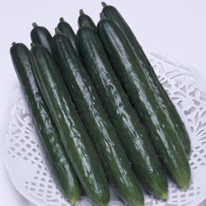 野菜たね タキイ交配 キュウリ Vアーチ 1袋(17粒)|kokkaen