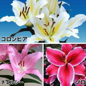 ユリ 最新花ユリCセット 3種15球|kokkaen