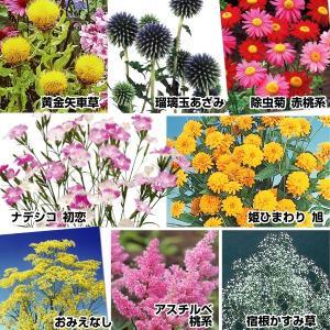 送料無料 花苗 人気の切花向き多年草セット 8種8株|kokkaen