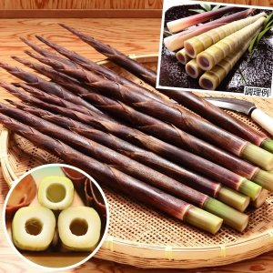 商品情報 秋にタケノコが採れ、「四方竹」の名の通り断面が四角になる面白い竹。高知県の特産品で、観賞用...