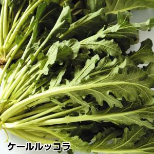 有用植物苗 ケールッコラR 2株