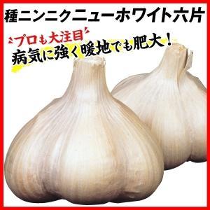 ニンニク 種球 ニューホワイト六片 500g / にんにく 種ニンニク 大蒜 たね タネ 球根 ガーリック