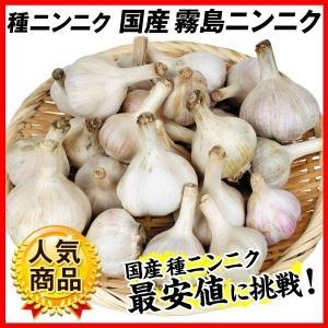 ニンニク 種球 霧島ニンニク (種球 ・国産) 500g / にんにく 種ニンニク 大蒜 たね タネ 球根 ガーリック