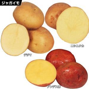 秋植えじゃがいも 定番美味ジャガイモセット 3種3kg...