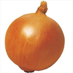 種 野菜たね タマネギ F1つり玉パーフェクト 1袋(5ml入) 玉葱 晩生 貯蔵/タネ たね たまねぎ 玉ねぎ 玉葱 玉ネギ|kokkaen