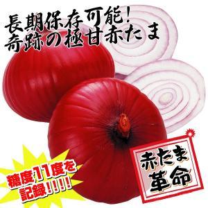 種 野菜たね タマネギ 中華妃 1袋(5ml入) 赤たまねぎ 貯蔵/タネ たね たまねぎ 玉ねぎ 玉葱 玉ネギ kokkaen