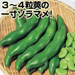 商品情報 莢は濃緑で3粒莢が多く、4粒莢になることも多い品種です。むき実の色は極濃緑な一寸ソラマメ!...