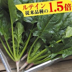 種 野菜たね ほうれん草 F1弁天丸R 1袋(30ml)/タネ たね ホウレンソウ ほうれんそう 法蓮草 ホウレン草