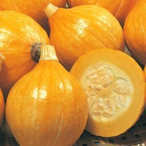 種 野菜たね カボチャ 露地抑制栽培向き F1コリンキーP 1袋(5ml) /サラダかぼちゃ 生/タネ たね カボチャ 南瓜