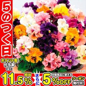 種 花たね パンジー バレリーナミックス 1袋(25粒)