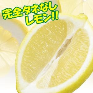果樹苗 カンキツ レモンシードレス あや 1株|kokkaen