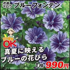 商品情報 夏の暑い時期に、涼し気な青花が美しい。地植えで放任栽培可能です。 お届け状態 素掘苗 分類...