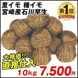 種いも 里いも 宮崎産 石川早生 10kg / さといも サトイモ たね芋 たねいも
