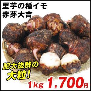 種いも 里いも 宮崎産 赤芽大吉 1kg / さといも サトイモ たね芋 たねいも